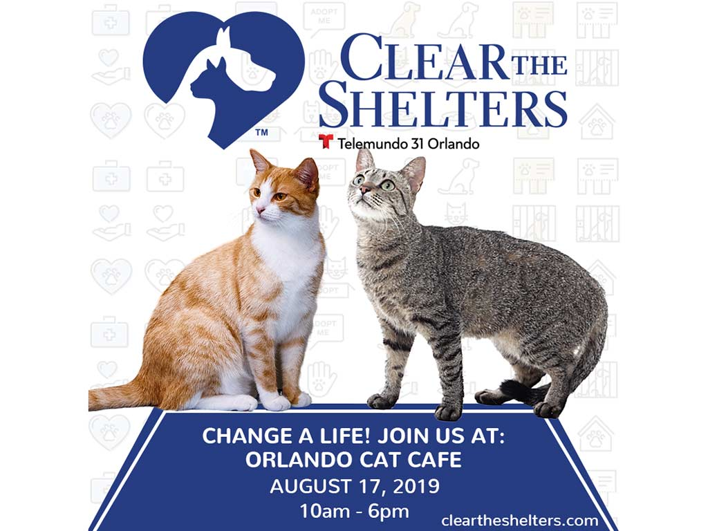 Orlando Cat Cafe Participates In Clear The Shelters™ Pet